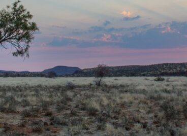 Landscape photo of sunset over the Karoo with a tiger in the foreground at Tiger Canyon Private Game Reserve